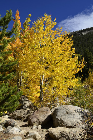 Fall Color - Alluvial Fan