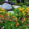 Beautiful Flowers in Vail Colorado