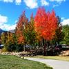 Fall Colors in Breckenridge Colorado