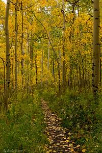 Trail near Silver Jack Reservoir