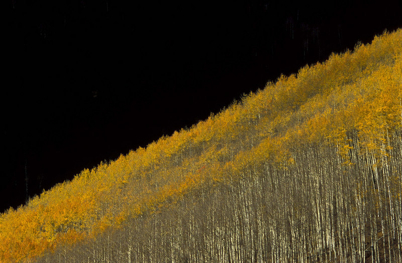 Arty aspens near Telluride.<br /> Photo © Carl Clark
