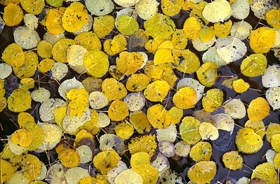 Autumn Gathering Near Telluride, Colorado 秋季聚會 科羅拉多州