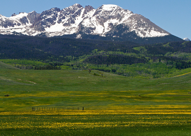 Gore Range and Wildflowers from Blue River Highway