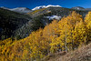 Aspen color burst near Gilman which is north of Leadville.<br /> Photo © Carl Clark