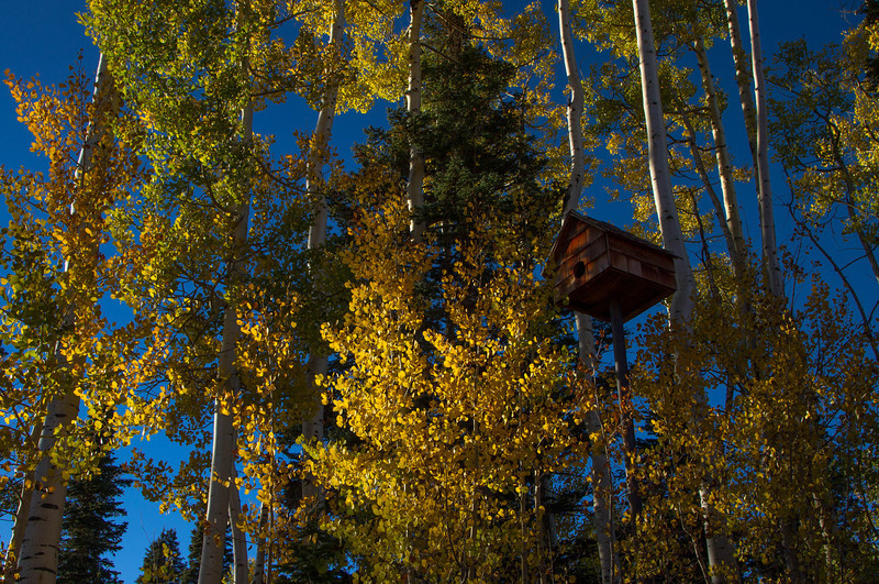 A birdhouse in the aspens on a perfect Colorado morning.<br /> Photo © Cindy Clark