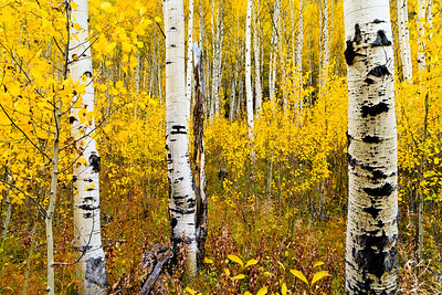 Autumn Display Maroon Bells, CO 秋季顯示 科羅拉多州  Please visit: http://www.youtube.com/watch?v=6VzZzQ04EQY for my video journey.