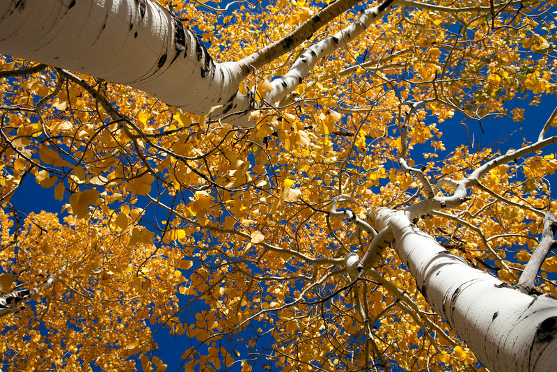 "Aspen Trees <div id=""badge"" style=""position:relative; width:110px; height:50px; margin:0px; padding:10px; background-color:white; border:1px solid #ff9933;"">    <div style=""position:absolute; top:10px; left:10px; padding:0px; margin:0px; width:118px; height:125px; line-height:20px; text-align:center;"">   <a href=""http://www.blurb.com/bookstore/detail/898326/?utm_source=badge&utm_medium=banner&utm_content=280x160"" target=""_blank"" style=""margin:0px; border:0px; padding:0px;"">  </div>    <div style=""position:absolute; top:10px; left:5px; overflow:hidden; margin:0px; padding:0px; border:0px; width:120px; text-align:left;"">        <div style=""width:105px; overflow:hidden; line-height:18px; margin:0px; padding:0px; border:0px;""> <a href=""http://www.blurb.com/bookstore/detail/898326?utm_source=badge&utm_medium=banner&utm_content=280x160"" style=""font:bold 12px Arial, Helvetica, sans-serif; color: #fd7820; text-decoration:none;"">Colorado Colors</a>        </div>        <div style=""font:bold 10px Arial, Helvetica, sans-serif; color:#545454; line-height:5px; margin:0px; padding:0px; border:0px;"">                     </div>        <div style=""font:10px Arial, Helvetica, sans-serif; color:#545454; line-height:15px; margin:0px; padding:0px; border:0px;"">            By Janet Fikar         </div>    </div>        <div style=""position:absolute; bottom:8px; left:5px; font:normal 10px Arial, Helvetica, sans-serif; color:#fd7820; line-height:15px; margin:0px; padding:0px; border:0px;"">        <a href=""http://www.blurb.com/books/898326"" force=""true"" only_path=""false"" style=""color:#fd7820; text-decoration:none;"" title=""Book Preview"">Book Preview</a>    </div>        <div style=""position:absolute; top:10px; right:10px; padding:0px; margin:0px;"">        <a title=""Photo book"" href=""http://www.blurb.com/?utm_source=badge&utm_medium=banner&utm_content=280x160""  target=""_blank"" style=""border:0; padding:0px; margin:0px; text-decoration:none;"">             </div>    <div style=""clear: both; border: 0px solid black;""></div></div>"