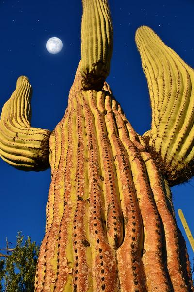 Little moon Big cactus
