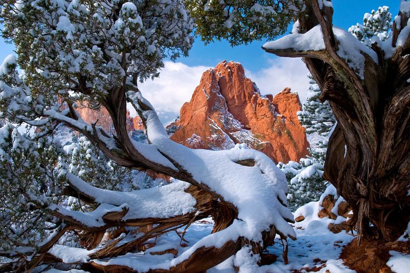 Garden of the Gods rock formation framed by twisted juniper trees with snow