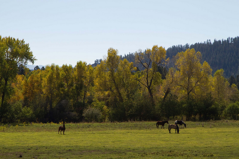 Pastoral scene near Lake Vallecito.<br /> Photo © Carl Clark