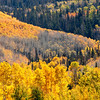 """Telluride, Colorado <div id=""""badge"""" style=""""position:relative; width:110px; height:50px; margin:0px; padding:10px; background-color:white; border:1px solid #ff9933;"""">    <div style=""""position:absolute; top:10px; left:10px; padding:0px; margin:0px; width:118px; height:125px; line-height:20px; text-align:center;"""">   <a href=""""http://www.blurb.com/bookstore/detail/898326/?utm_source=badge&utm_medium=banner&utm_content=280x160"""" target=""""_blank"""" style=""""margin:0px; border:0px; padding:0px;"""">  </div>    <div style=""""position:absolute; top:10px; left:5px; overflow:hidden; margin:0px; padding:0px; border:0px; width:120px; text-align:left;"""">        <div style=""""width:105px; overflow:hidden; line-height:18px; margin:0px; padding:0px; border:0px;""""> <a href=""""http://www.blurb.com/bookstore/detail/898326?utm_source=badge&utm_medium=banner&utm_content=280x160"""" style=""""font:bold 12px Arial, Helvetica, sans-serif; color: #fd7820; text-decoration:none;"""">Colorado Colors</a>        </div>        <div style=""""font:bold 10px Arial, Helvetica, sans-serif; color:#545454; line-height:5px; margin:0px; padding:0px; border:0px;"""">                     </div>        <div style=""""font:10px Arial, Helvetica, sans-serif; color:#545454; line-height:15px; margin:0px; padding:0px; border:0px;"""">            By Janet Fikar         </div>    </div>        <div style=""""position:absolute; bottom:8px; left:5px; font:normal 10px Arial, Helvetica, sans-serif; color:#fd7820; line-height:15px; margin:0px; padding:0px; border:0px;"""">        <a href=""""http://www.blurb.com/books/898326"""" force=""""true"""" only_path=""""false"""" style=""""color:#fd7820; text-decoration:none;"""" title=""""Book Preview"""">Book Preview</a>    </div>        <div style=""""position:absolute; top:10px; right:10px; padding:0px; margin:0px;"""">        <a title=""""Photo book"""" href=""""http://www.blurb.com/?utm_source=badge&utm_medium=banner&utm_content=280x160""""  target=""""_blank"""" style=""""border:0; padding:0px; margin:0px; text-decoration:none;"""">             </div>    <div style=""""clear: bo"""