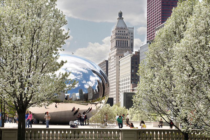 Chicago Bean with Pear trees blooming, Millennium Park