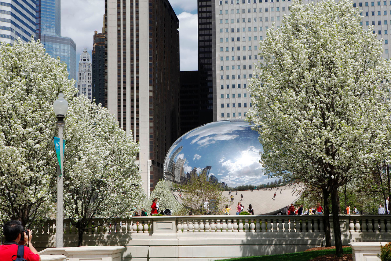 Chicago bean with pear trees 2