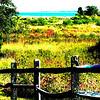Brayley's Meadow