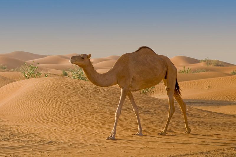 Desert, Dubai Emirate