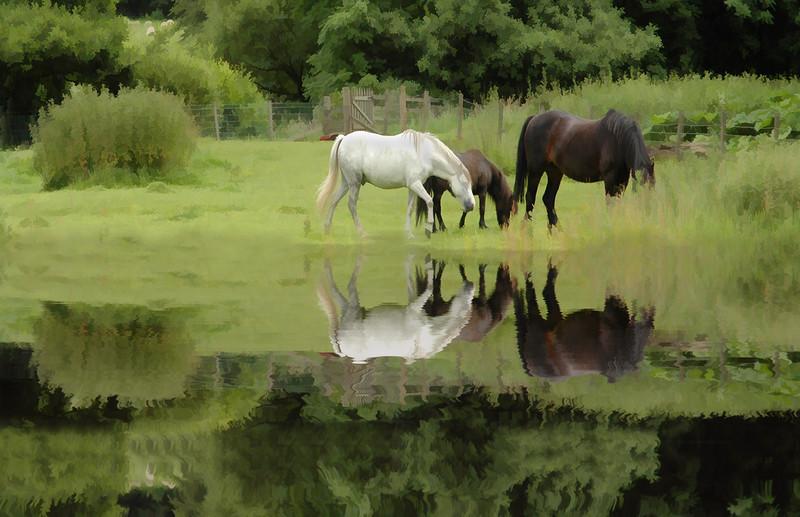 Reflected Horses, Scotland