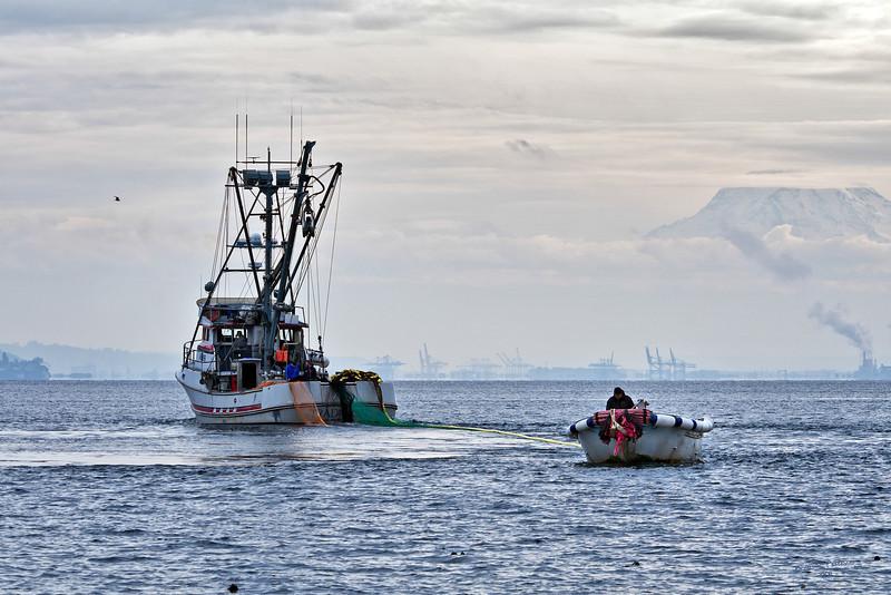 Purse sceine fishing in Puget Sound outside Gig Harbor, Washington.