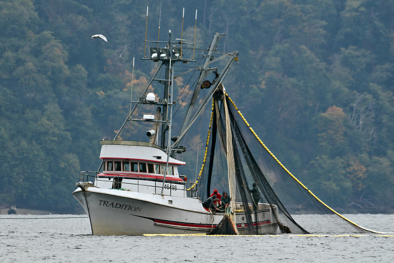 Purse sceine fishing in Puget Sound outside Gig Harbor, Washington.