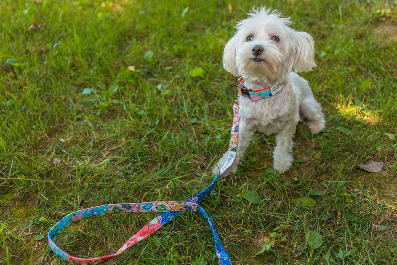 Animale Pet Accessories
