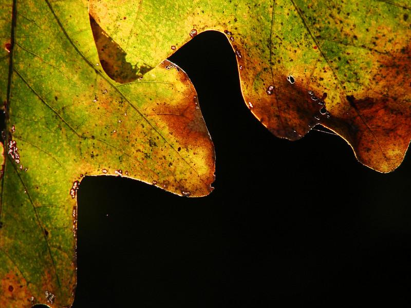 1st prize winner - Leah Gilbert: Autumn Illumination [20071202 competition]