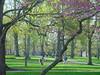 Spring Fever [Judy Weseman]