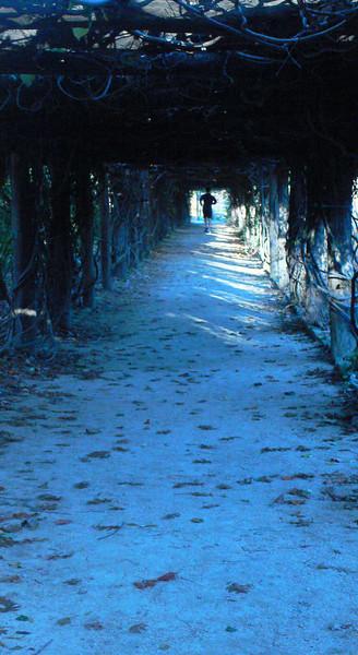 Arboretum grape arbor