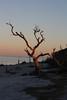 Trine Christensen: Beach tree [20110220 competition]