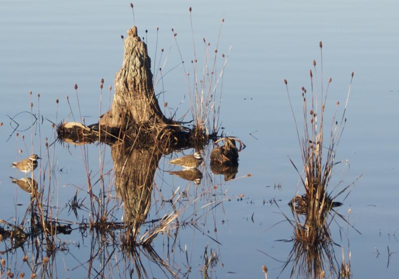 Trine Christensen: Water birds [20110220 competition]