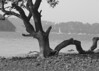 Jerri Greenberg: Beach Serpent [20110220 competition]