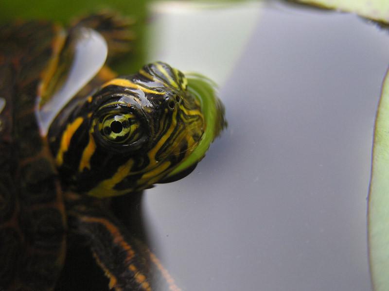 Oliver Vest - botanicalgardens-turtlelookingback