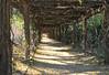 Rick Lee - Coker Arboretum