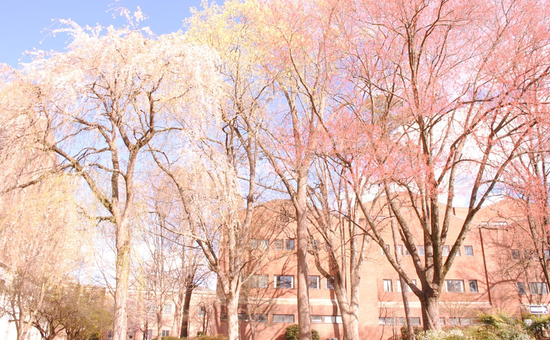 Vered: T(h)ree colors in UNC