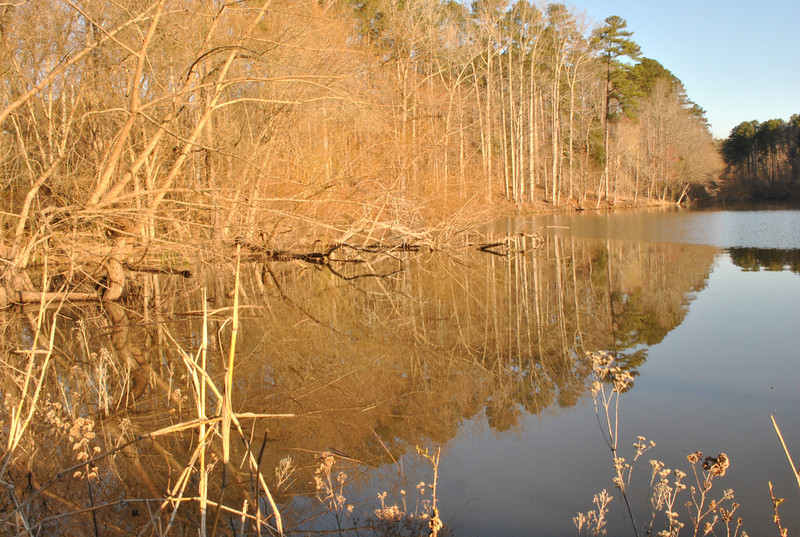 Vered: Chapel Hill's University Lake, gets ready for spring