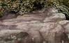 Boulder with Patina