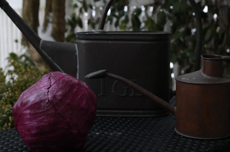 Purple: Gardener