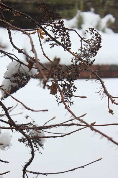 bent blueberry bush - Leslie Smith