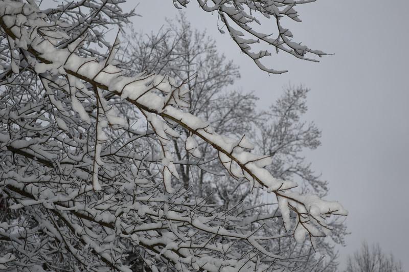 Snow scene-A