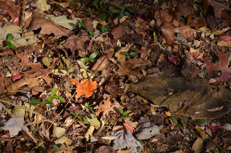 Lone leaf