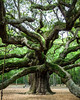 Ed Pattishall: Angel Oak