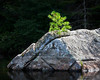 Ed Pattishall: Tree on Rock