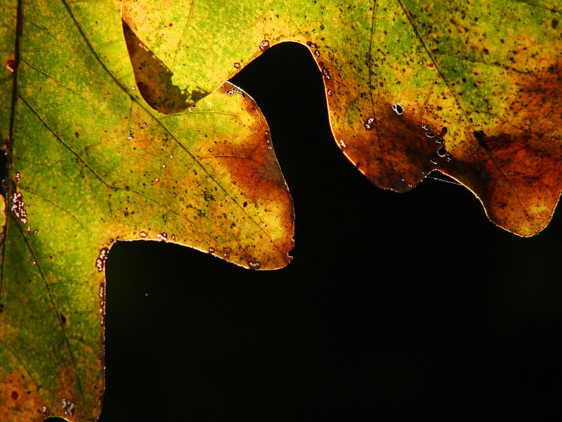 {1st prize winner} 20071202 'Autumn in the Triangle' - Leah Gilbert: Autumn Illumination