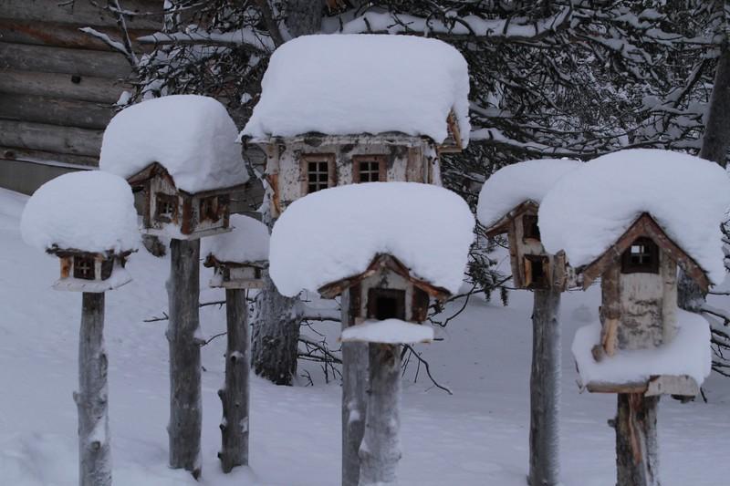 {2nd prize winner} 201810 'Cold' - Steve Eyerman: Bird Igloos