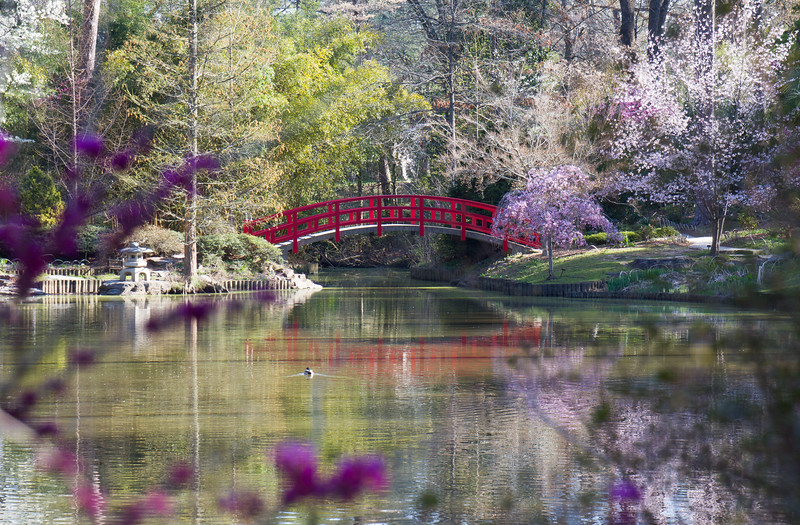 {1st prize winner} 201504 'Springtime'- Holly Bourne: Duke Gardens Bridge