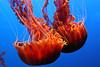 {4th prize winner} 201407 'Red' - Jamie Cavanaugh: Red Sea