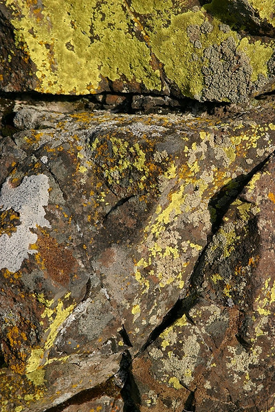 Colorful Lichens on Basalt