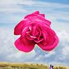 Rose Composite