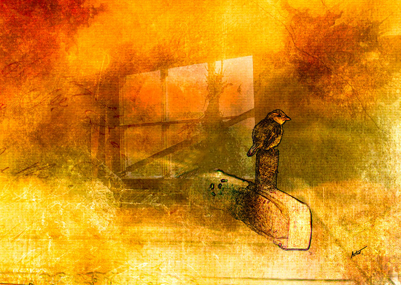 The English Sparrow and Thoughts of Turner