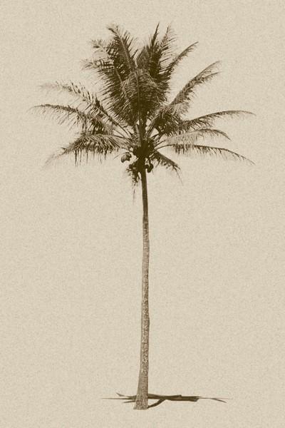 """""""Sepia Palm"""""""