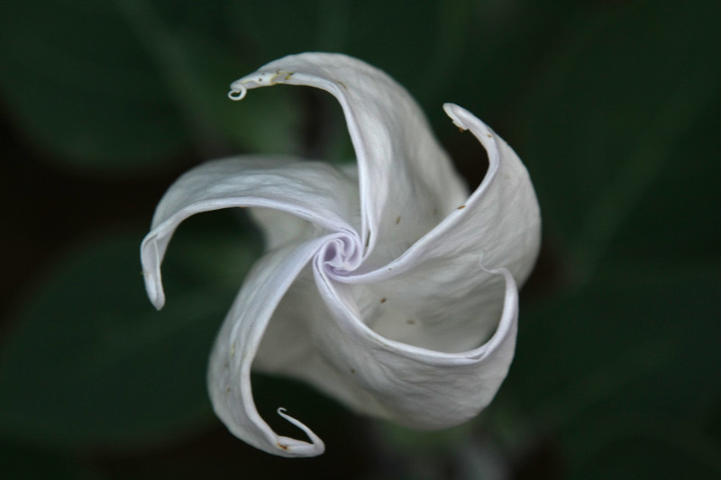 """Moon Lily"""
