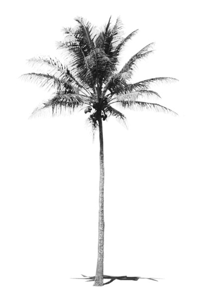 """Black and White Palm"""